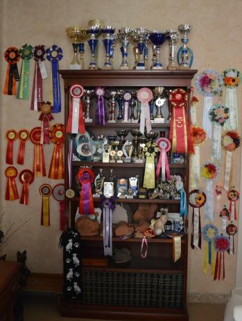 trofeos.jpg