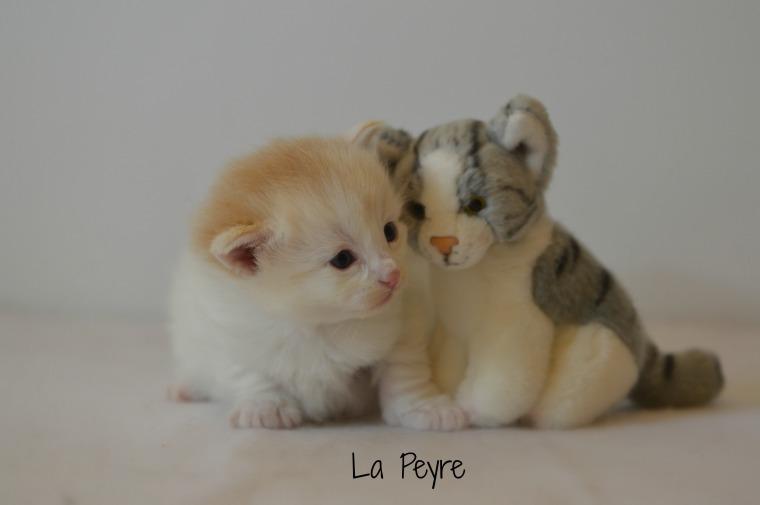 brie cat fb.jpg